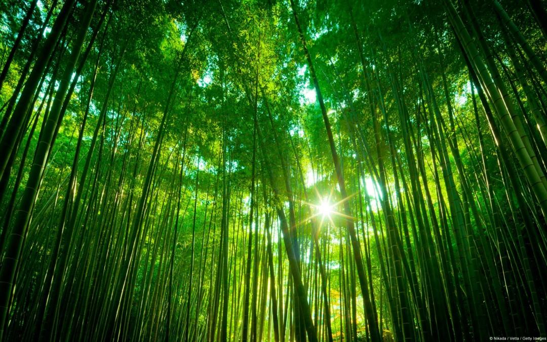 Conéctate con la Naturaleza - Gaia Psicologia